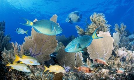 Pengertian Ekosistem Laut Contoh Ekosistem Laut Dangkal