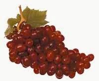 http://ficusbenyamina.blogspot.com/2014/08/anggur-dan-sejarahnya.html