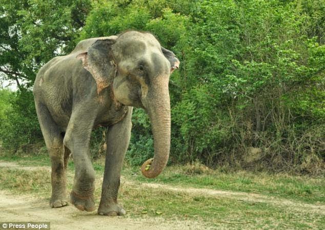 هل تعلم ماهى قصة الفيل الذي بكى لحظة تحريره بعد تقيده 50 سنة؟