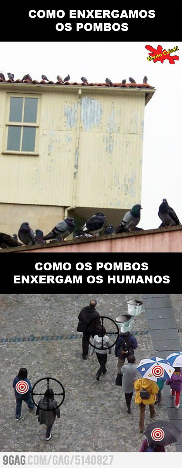 pombos, enxergam, humanos, alvos, eeeita coisa