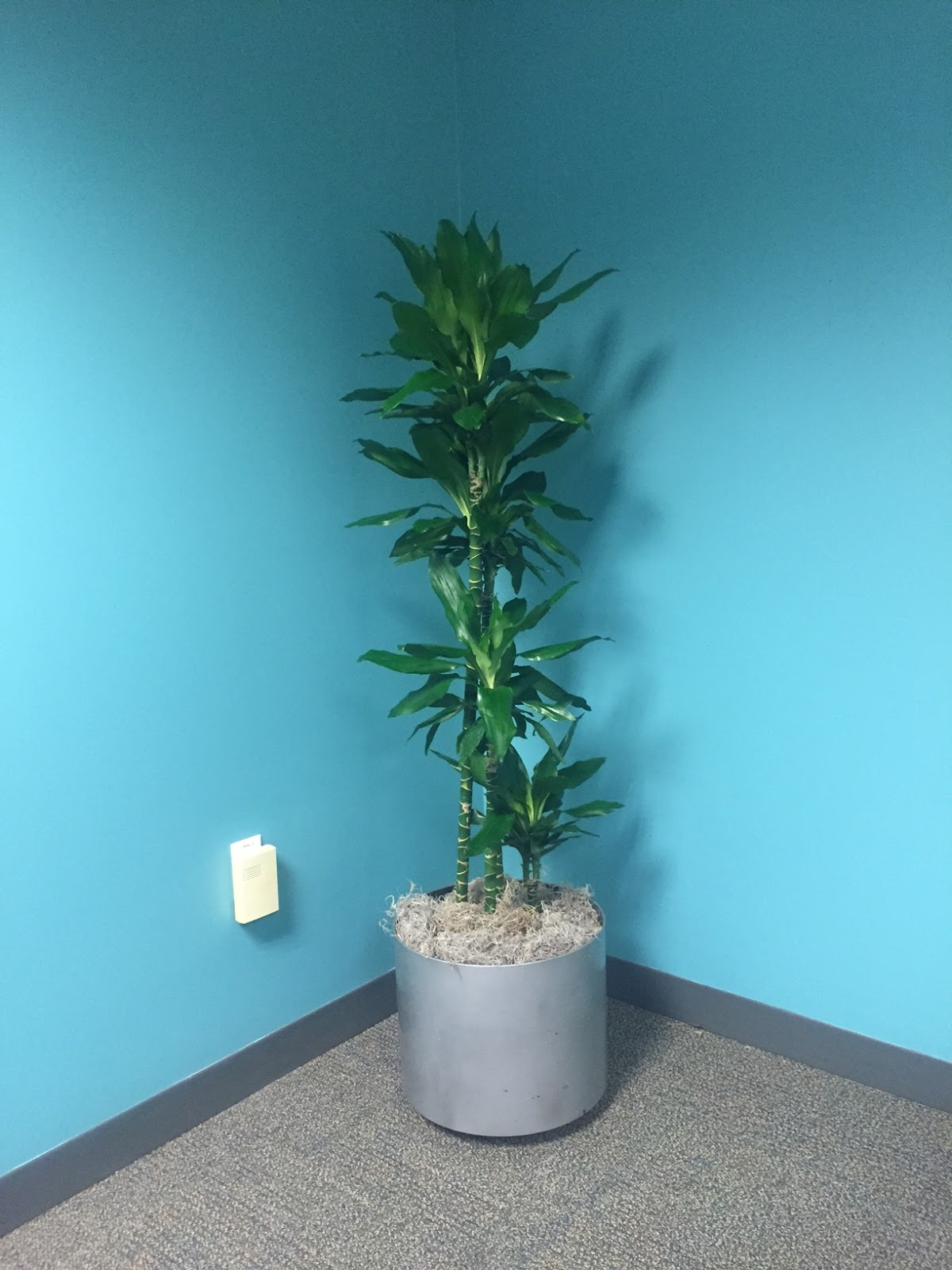 Chelmsford MA Office Plant Maintenance Care Design Pricing