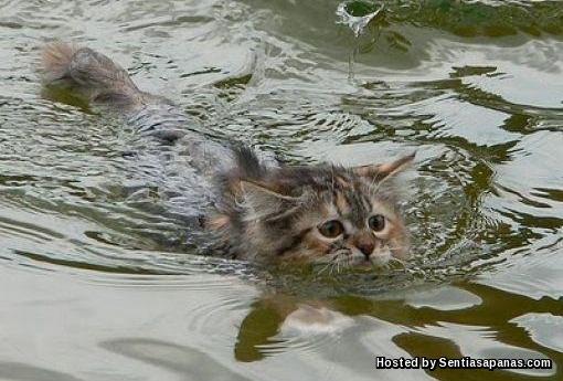 Kucing takut air