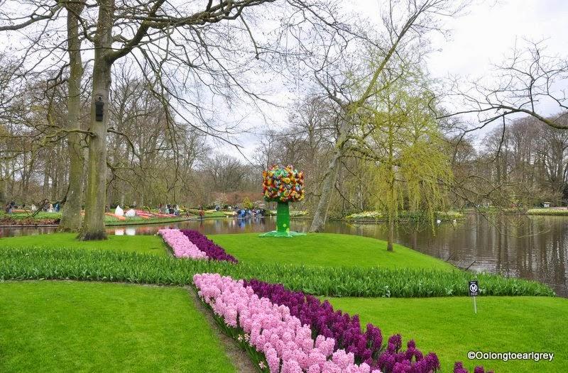Hyacinths,  Keukenhof Gardens, The Netherlands
