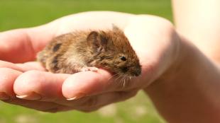 Mutant Mice Live Longer