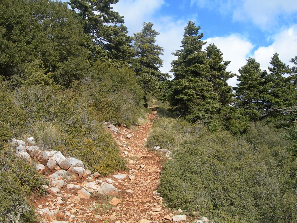 Good routes through the pine forest for bikers and walkers