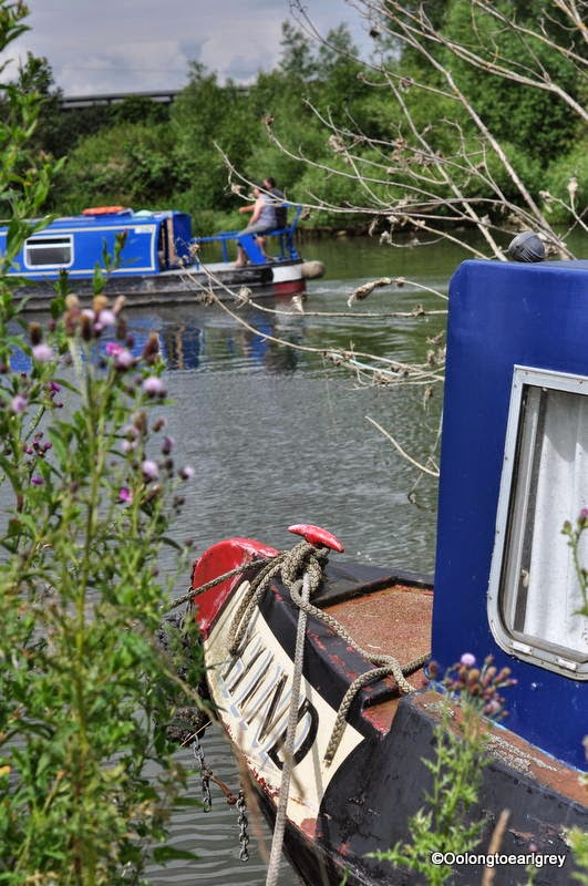 Canal boats, Abingdon-on-Thames, Oxfordshire, UK