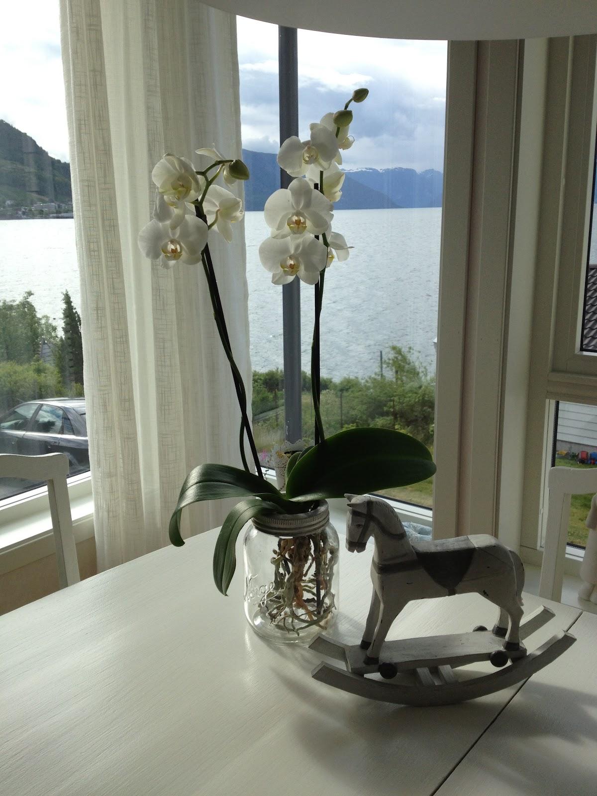 norgesglass nettbutikk sogn og fjordane
