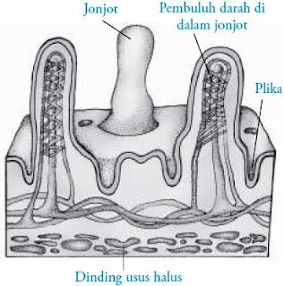 Organ usus halus tersusun atas berbagai jaringan