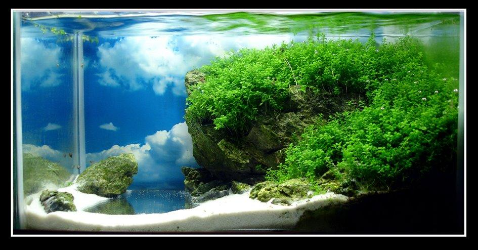 Aquascape gallery aquascaping world competition gallery rise of nature by francisco miranda - Gallery aquascape ...