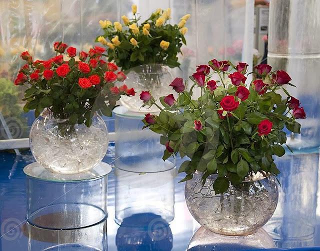 Flores e rosas vermelhas