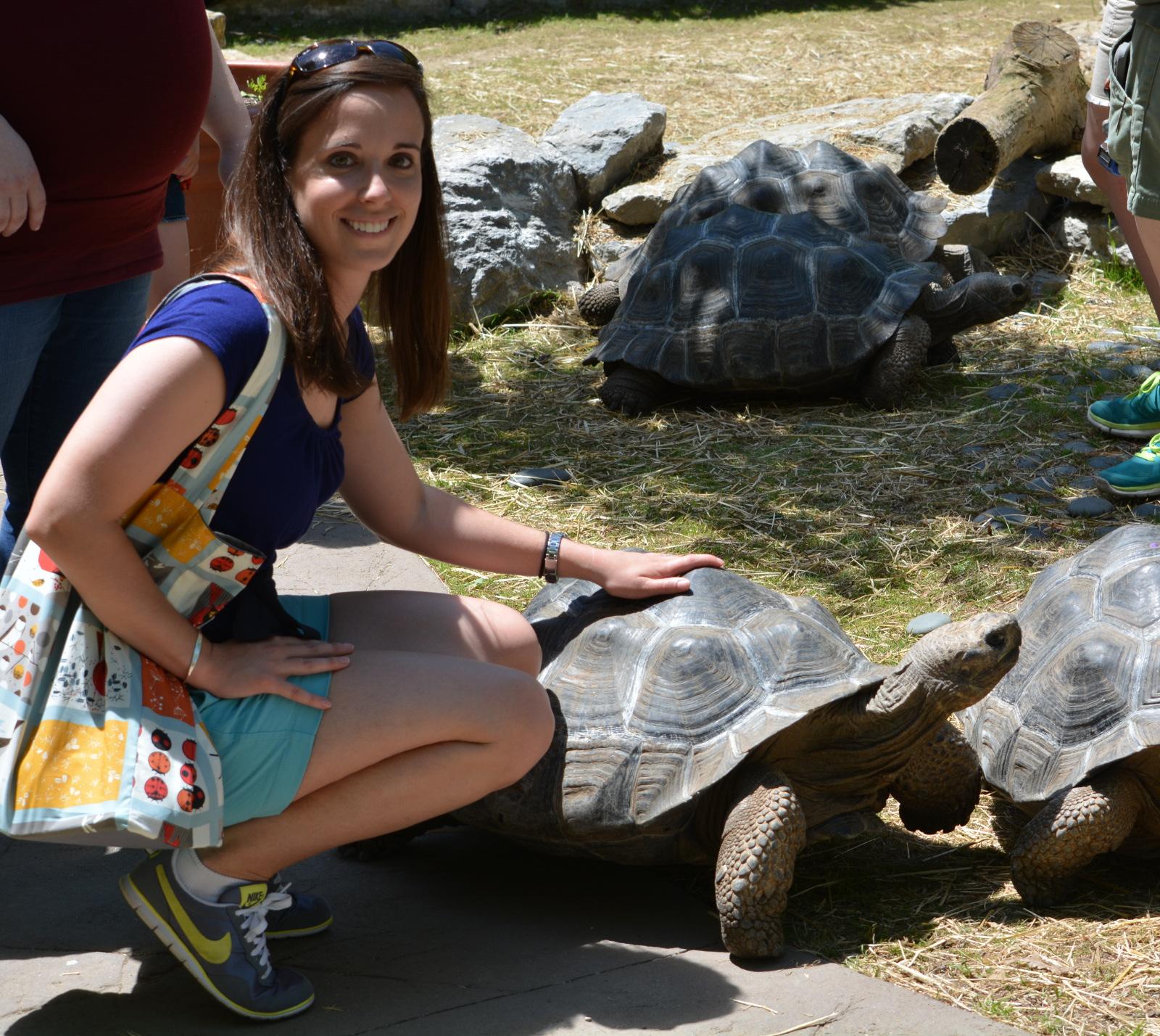 cozy birdhouse | galapagos tortoise