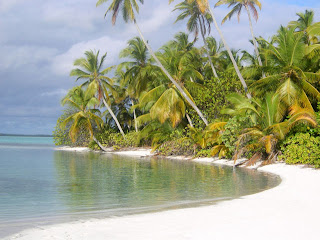 beautiful image of tropical island ocean palm trees deserted green foliage