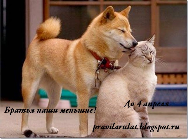 http://pravilarulat.blogspot.ru/2015/03/blog-post.html
