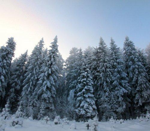 Фото красивой зимы (15 фото)