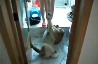 perro se hace el muerto para que no lo bañen