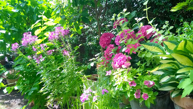 Nettes lille have: juli 2015