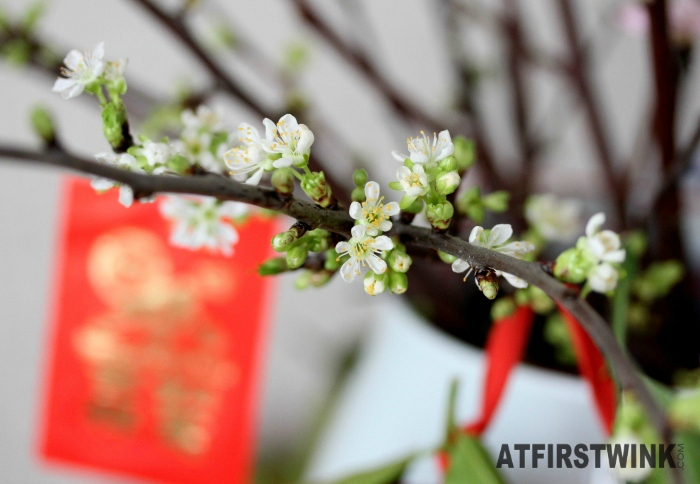 Chinese New Year 2015 white cherry blossoms and red packet