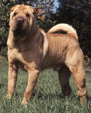 Does A Cross Bred Dog Affect Training