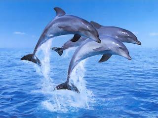 Delfines saltando encima del mar Fotografias de delfines