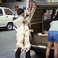 豚肉出荷,香港〈著作権フリー無料画像〉Free Stock Photos
