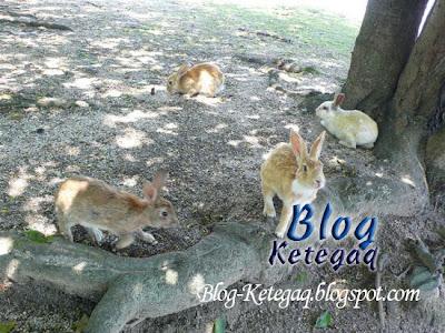 pulau arnab di Jepun