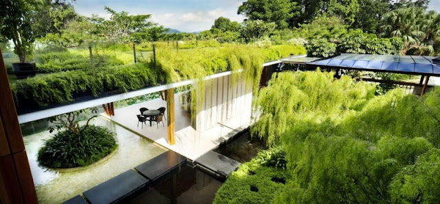 green roof top