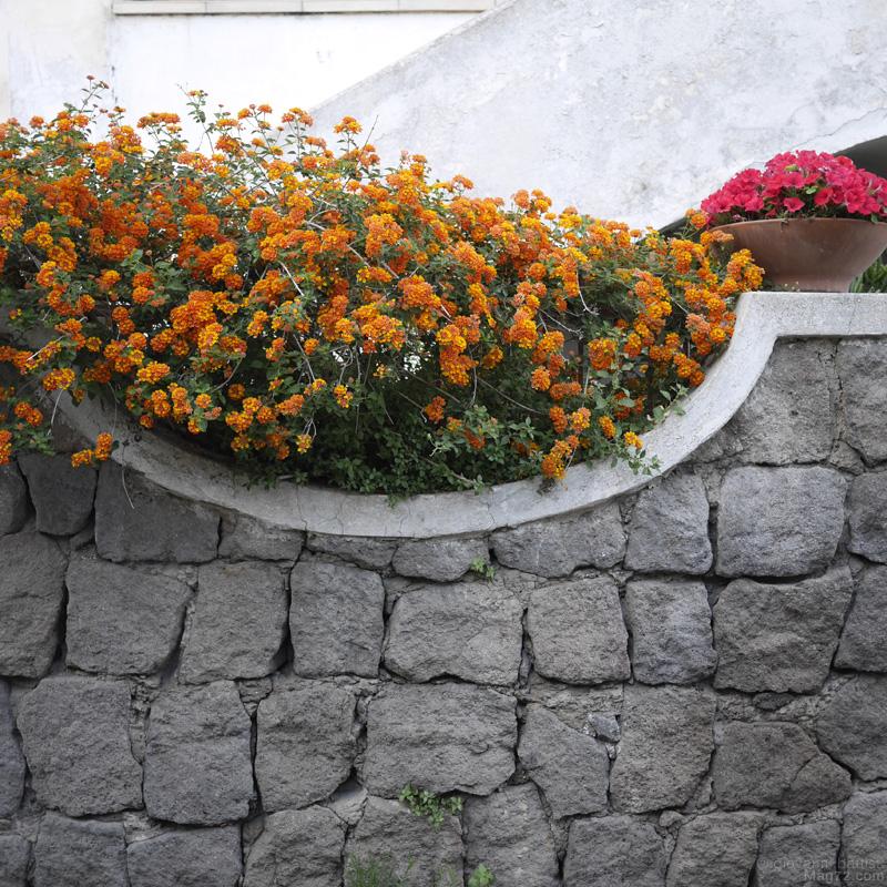 Pianta di fiori e muretto in pietra grigia