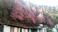 Chopta Valley, Garhwal Hills, Gopeshwar