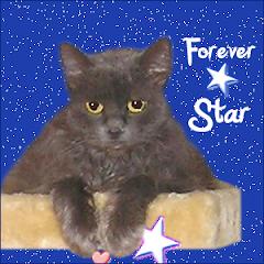 Star  RIP
