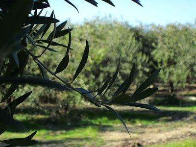 La Boella near Salou