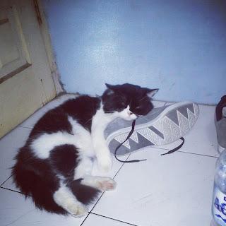 catloverscirebon.blogspot.com