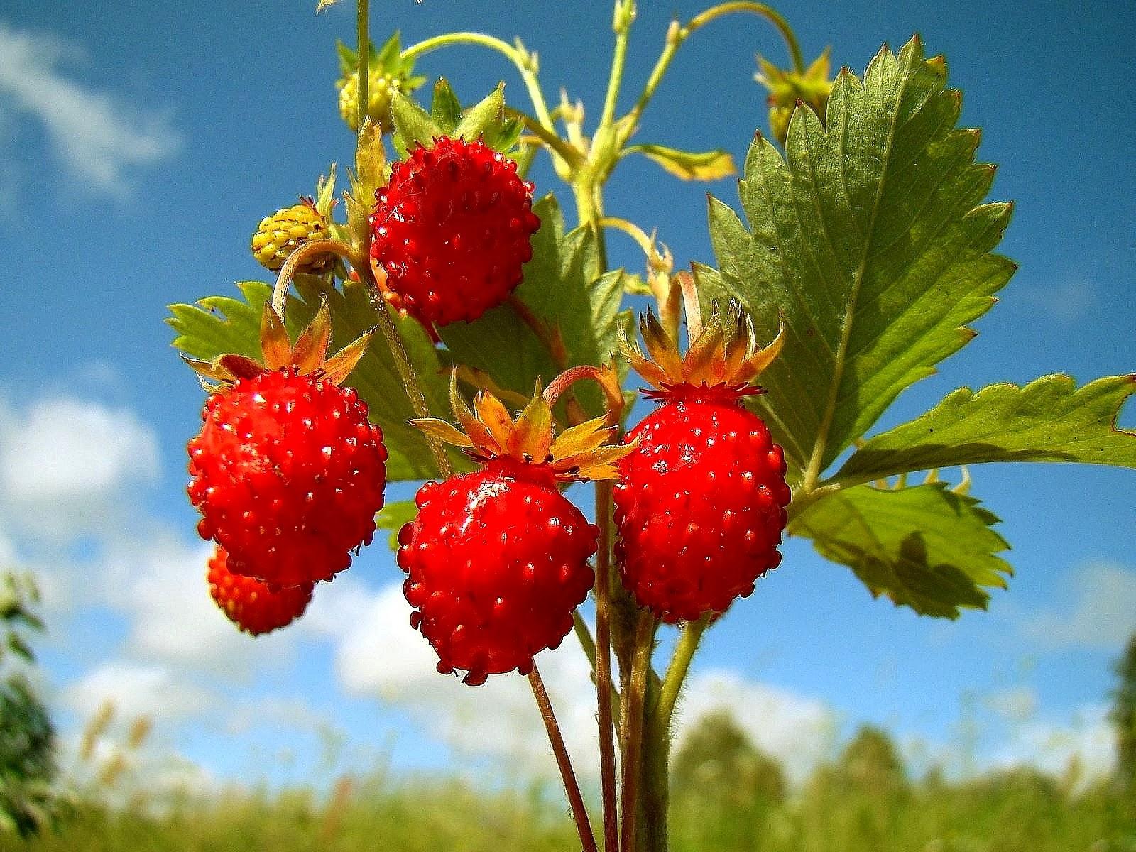 fruits tree wallpaper hd wwwimgkidcom the image kid