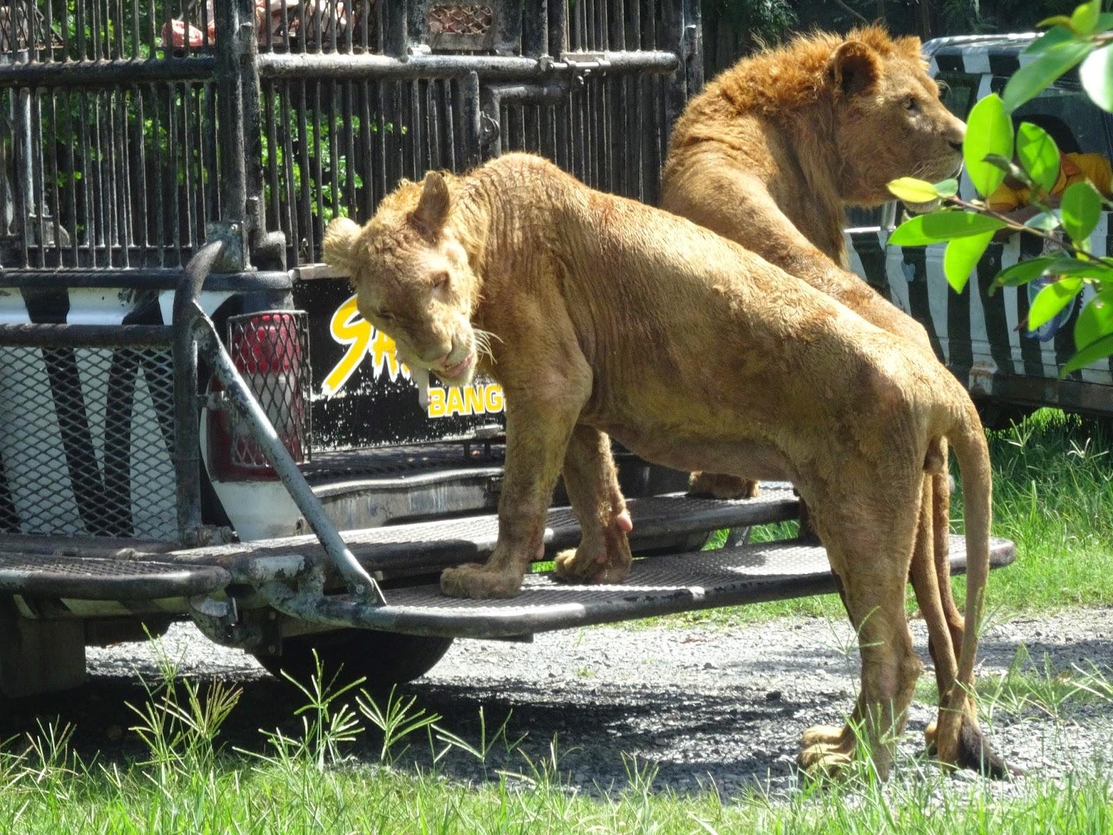 Bangkok Safari World