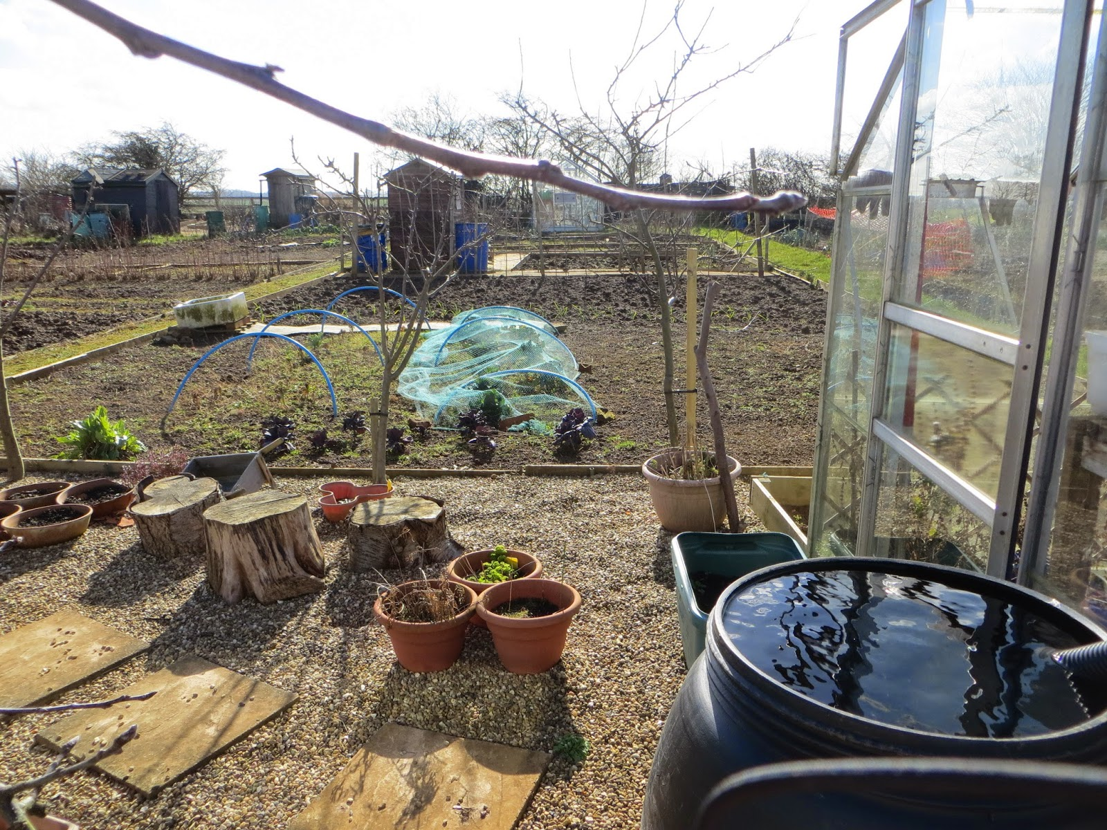 how's the allotment looking as winter turns to spring??