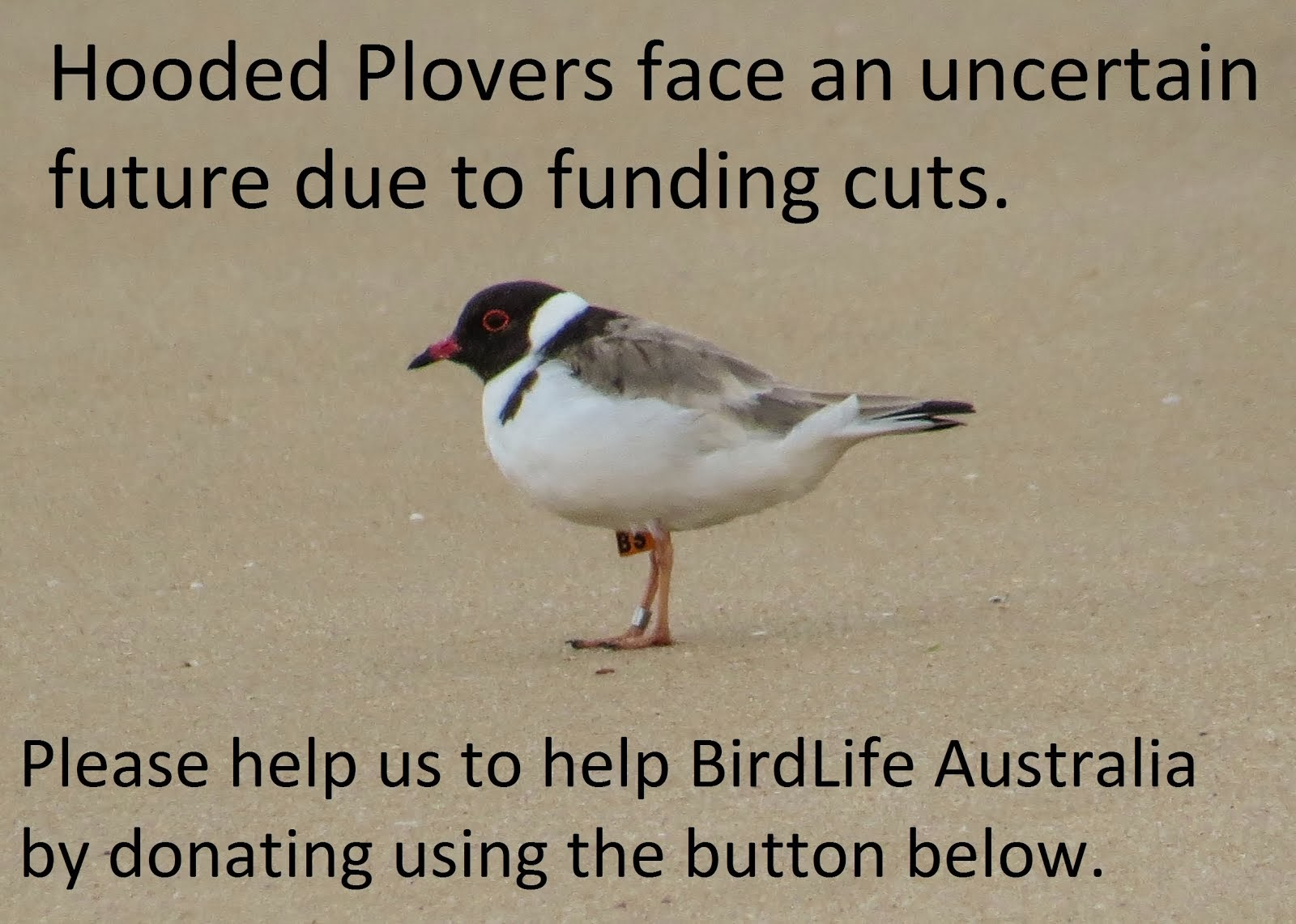 Hooded Plover Appeal.