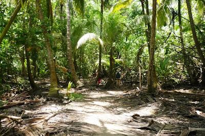 Tayrona National Park, P.N. Tayrona, parque nacional de colombia, parques nacionales de colombia