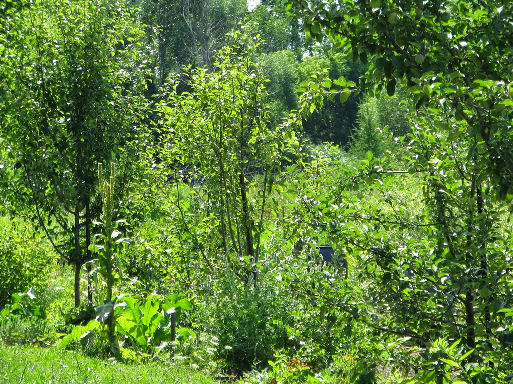 Permaculture en climat froid formation implantation d 39 une for t nourrici re - Agencer son jardin ...