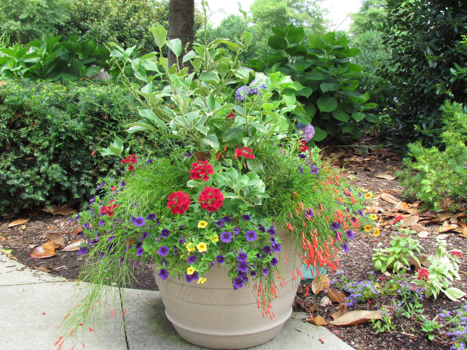 Container planting at Westhaven- Franklin, Tennessee