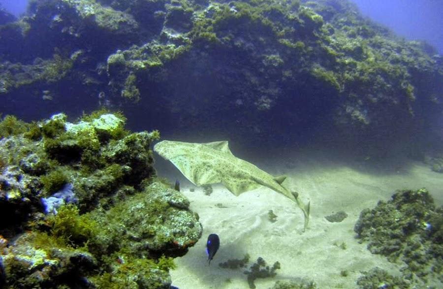 Un tibur n da el susto de su vida a unos pescadores mascotas for Como cuidar peces de agua fria