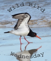 http://paying-ready-attention-gallery.blogspot.com/2015/06/wild-bird-wednesday-150-crested-tern.html