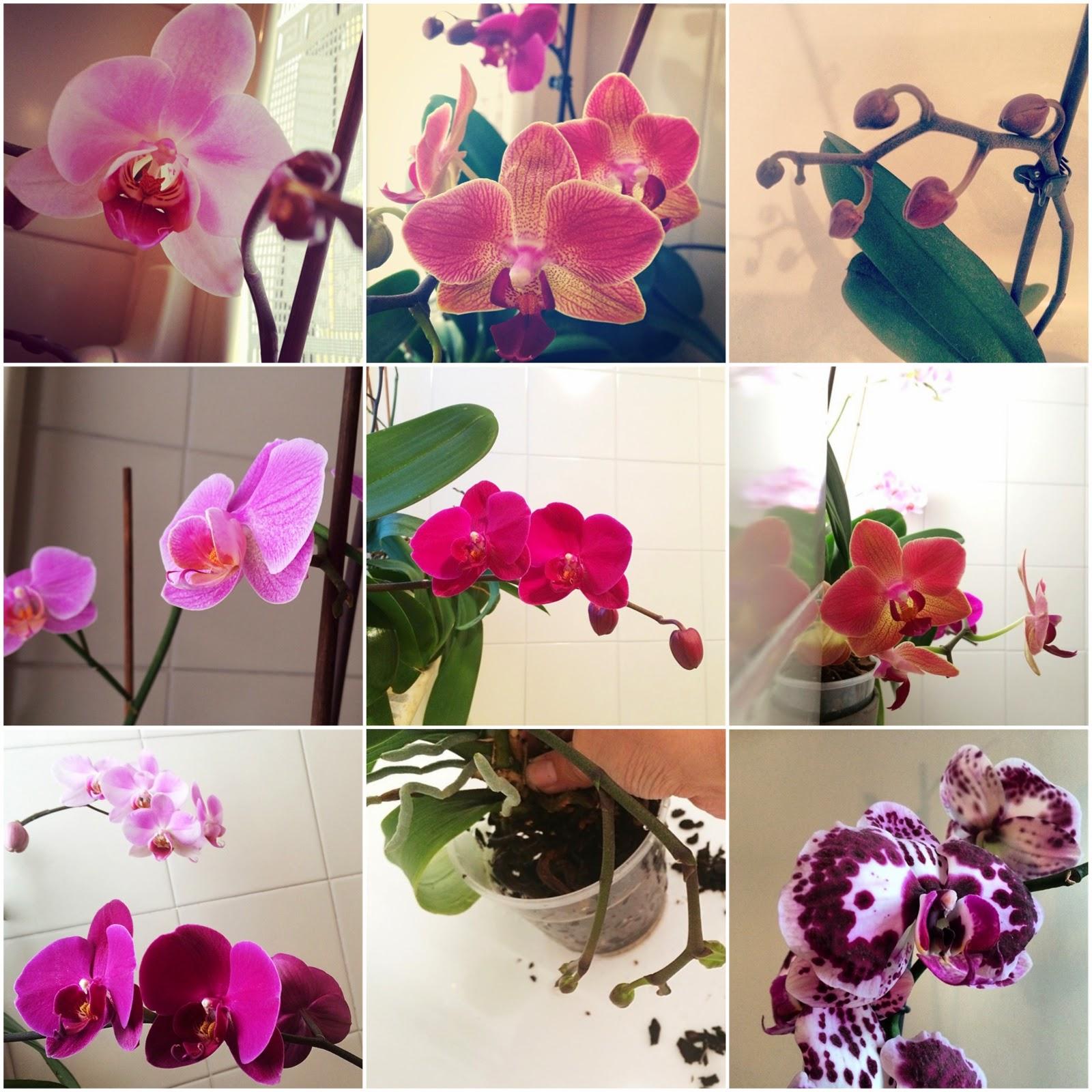 Come prendersi cura di un 39 orchidea senza farla schiattare - Come curare un orchidea in casa ...