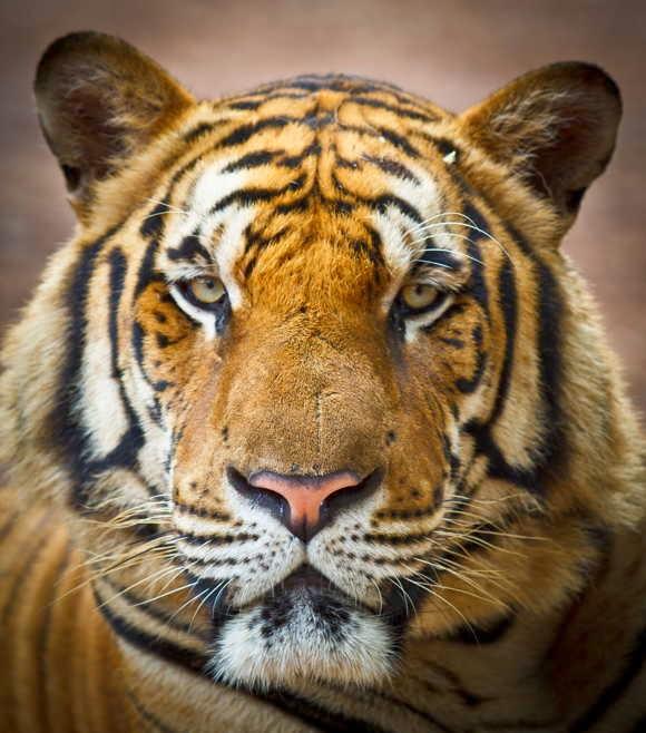 25 Amazing Wild Cats Stock Photo