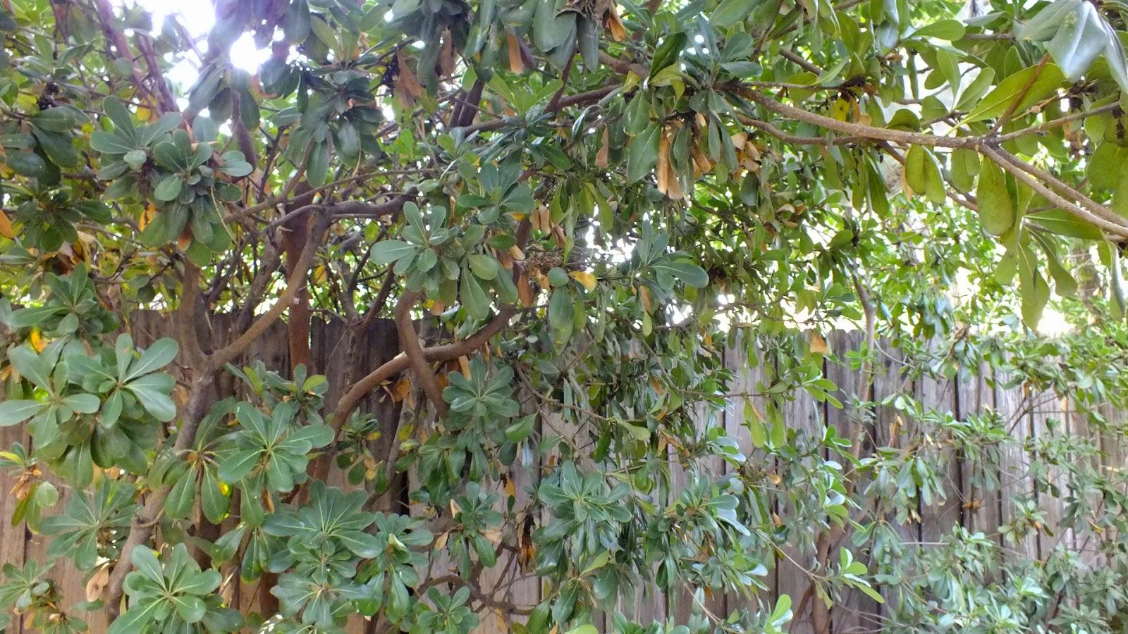 Todo sobre Hummingbird Nests