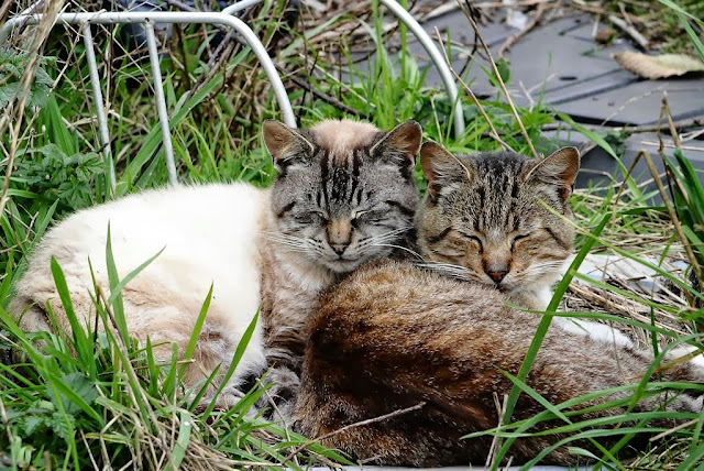 Friends, feral cats stick together