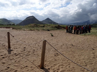 Voluntarios, dunas y especies invasoras