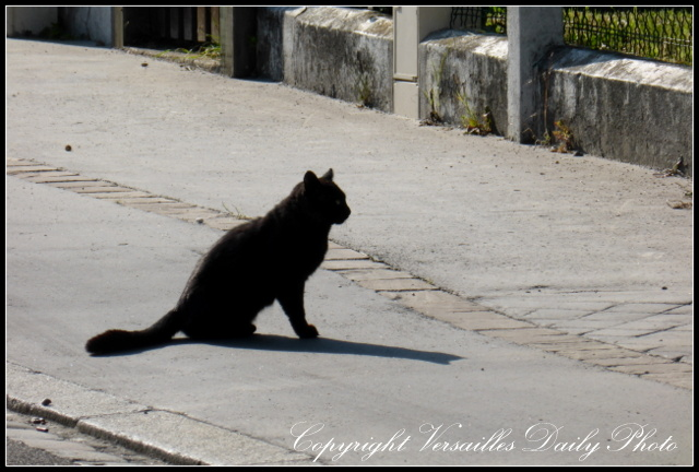 Black cat Versailles prés aux bois