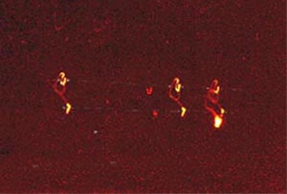 fotografía tomada por un policia en Illinois en enero 2000