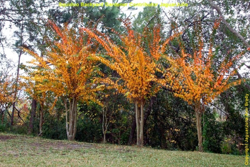 changing of leaves on crepe myrtle trees after pruning