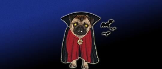 Visiteurs fictifs depuis les sites de spam Adsensewatchdog.com et vampirestat.com