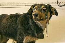 Pavlov's Dog bandnaam idee - Het hondje van Pavlov?